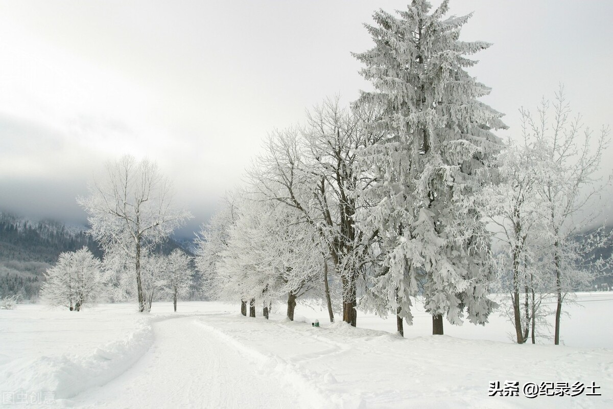 今日河南大部分地区迎来第一场雪,对庄稼会有影响吗?