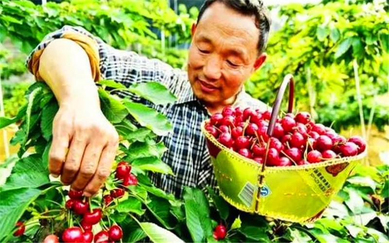 50岁的人老家有10亩土地,种植什么,一年收入能超过10万元