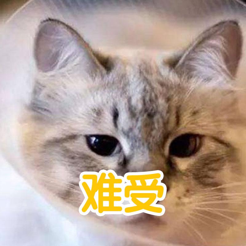 猫咪麻醉一般多久能醒过来?铲屎官看过来