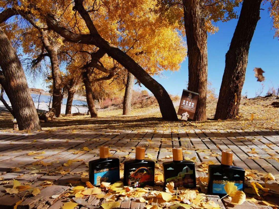 在额济纳旗金色胡杨林里饮过秋天,相撞在青稞酒的杯壁,说声再见