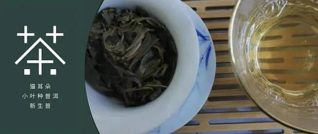 "小茶控品鉴包の古树猫耳朵:非主流<a href='http://www.tea160.com/pindao/puer/puer.aspx' target='_blank' style='color:#009900;font-size: 16px;'  >普洱茶</a> 小叶种""猫耳朵""尝试"