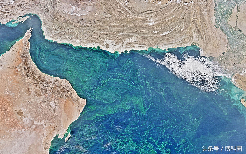 """世界上最大的""""死亡地带""""在阿拉伯海中"""
