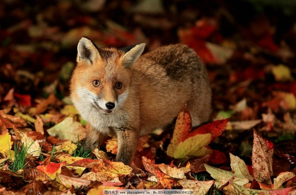 救狐狸得到意外惊喜!讲几个大兴安岭真实灵异小故事,你听过吗?