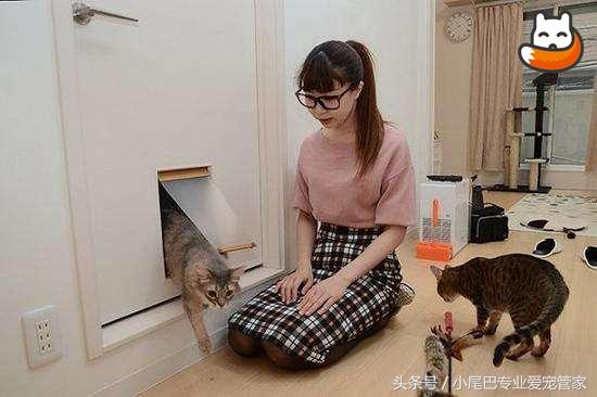养小猫猫前七个务必考虑到的事,你搞好提前准备吗?