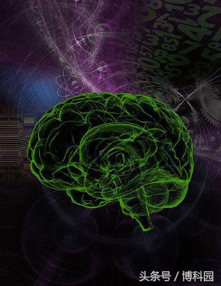 可以通过脑部扫描来预测智力?