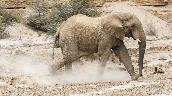 大象焦依人在现在线视频:大象会无畏小蜜蜂吗?