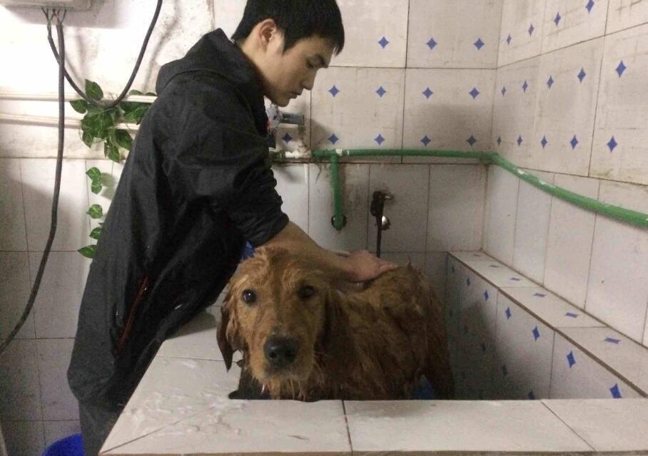 这样帮狗狗洗澡,简直就是害了它,洗澡5大雷区你做错了几个?