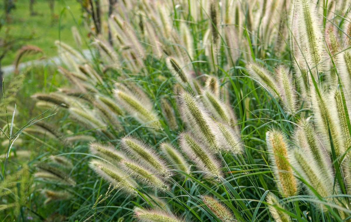"""《说文解字》第50课:在超市见到的杂粮""""荞麦""""古时候也很高大上"""