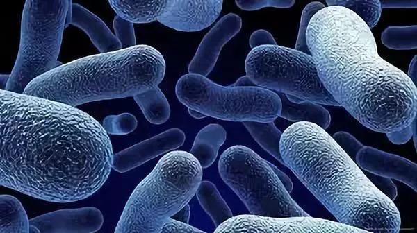 益生菌有害无益?你可能又被「标题党」了