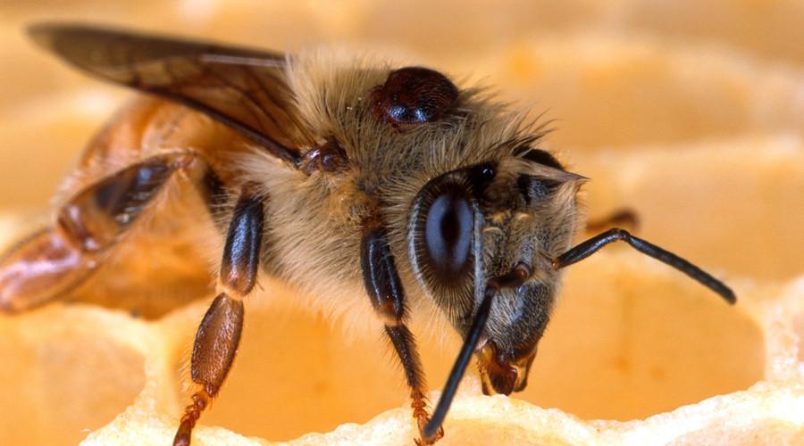 必备技巧丨被马蜂蛰了,最好的处理方法是什么?