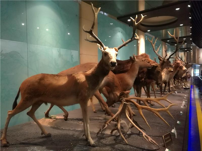 自驾游·二去国家动物博物馆