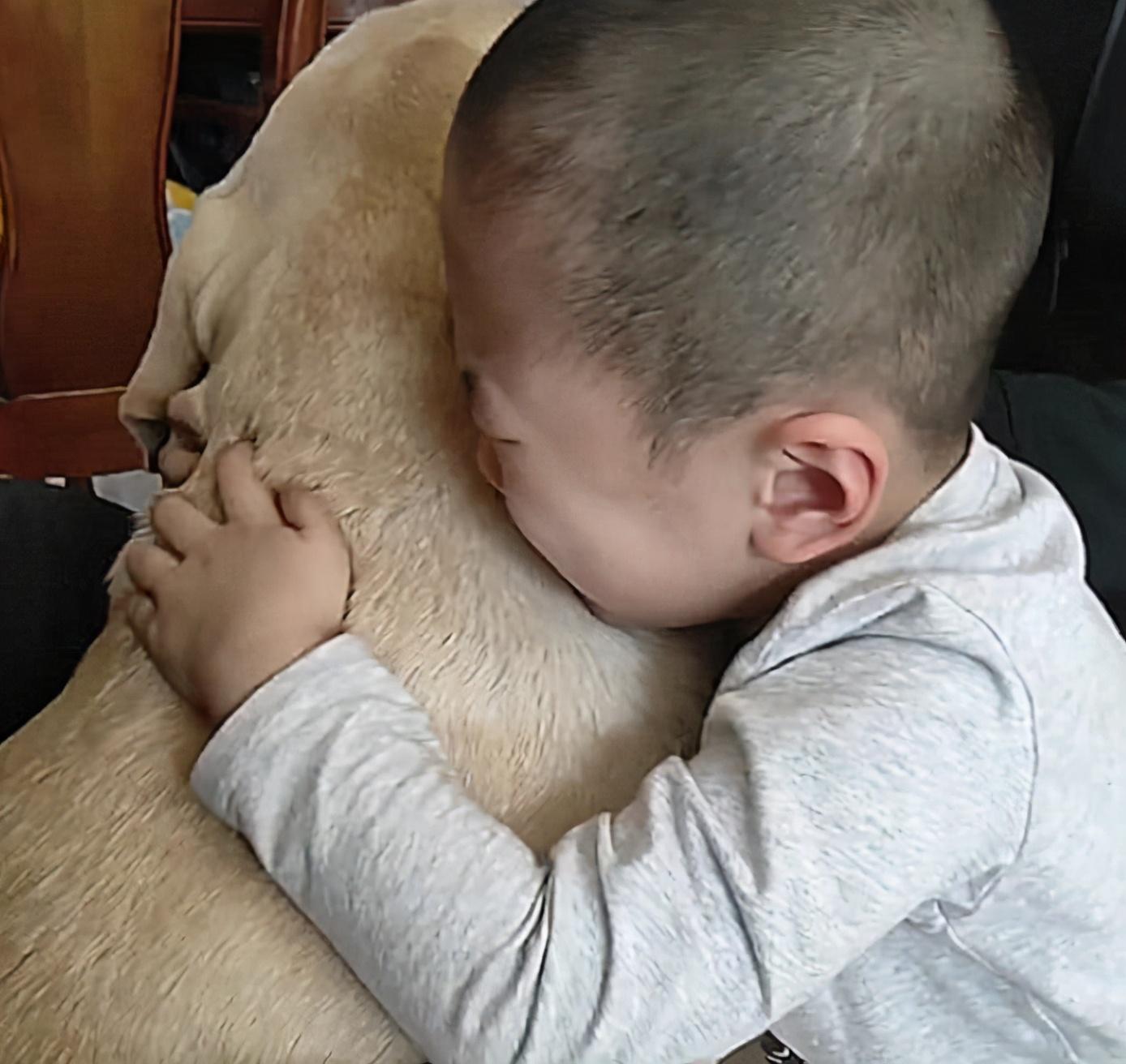 狗狗意外丢失,找到后,宝宝扑上来的动作,一旁的父母看哭了