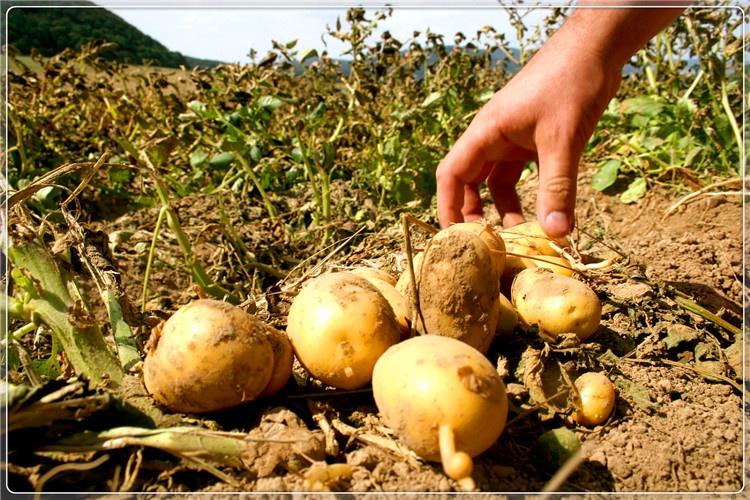 38岁人回农村搞种植,3万元投入,种什么一年能收入10万以上