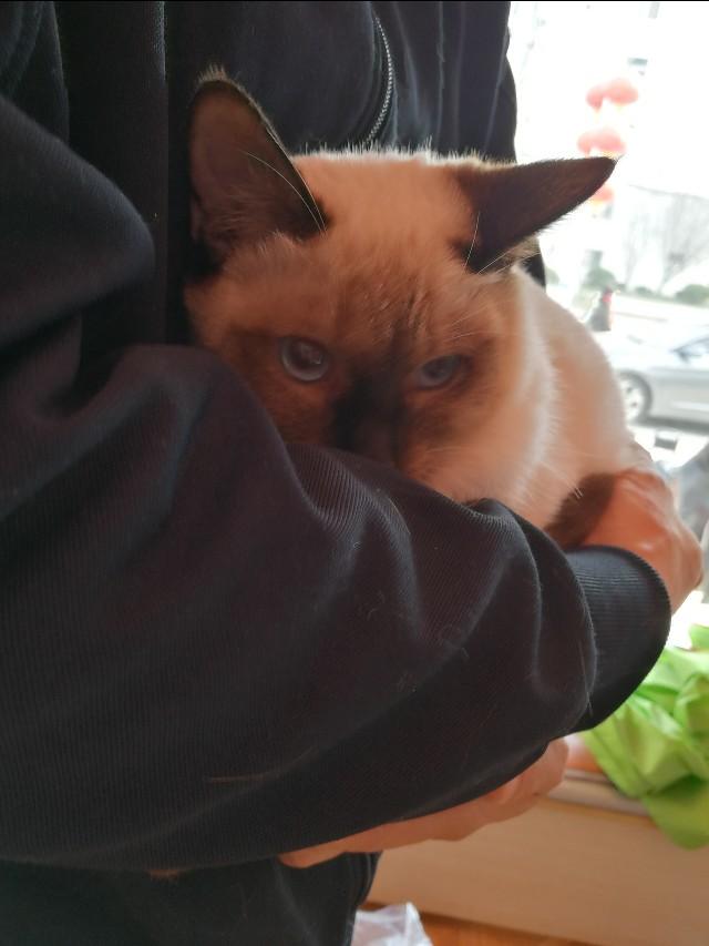 一个萌新猫奴的养猫心得分享!