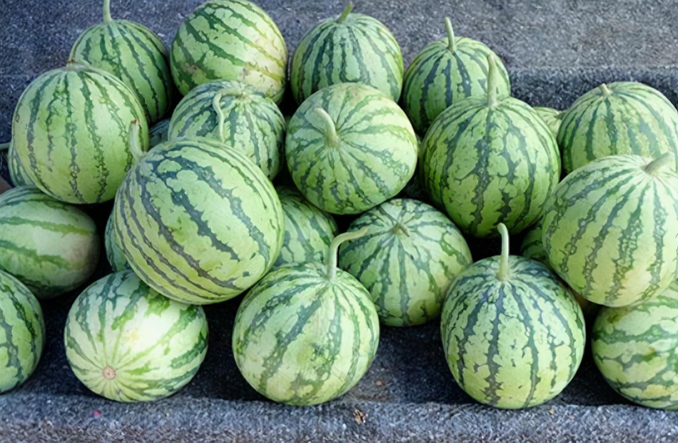 买西瓜别只用手拍,掌握几个挑选技巧,就知道西瓜甜不甜,不买错
