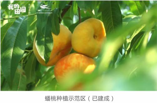 台灣牽手智利建立農業科技示範園,智利車厘子將引種台灣
