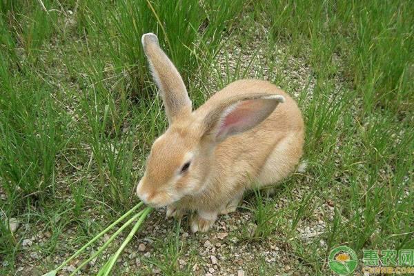 兔子只吃胡蘿卜嗎?不同食物對兔子生長有什麽作用?