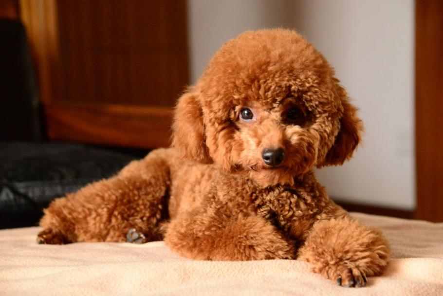 这六种狗狗,便宜又好养,谁养谁走运