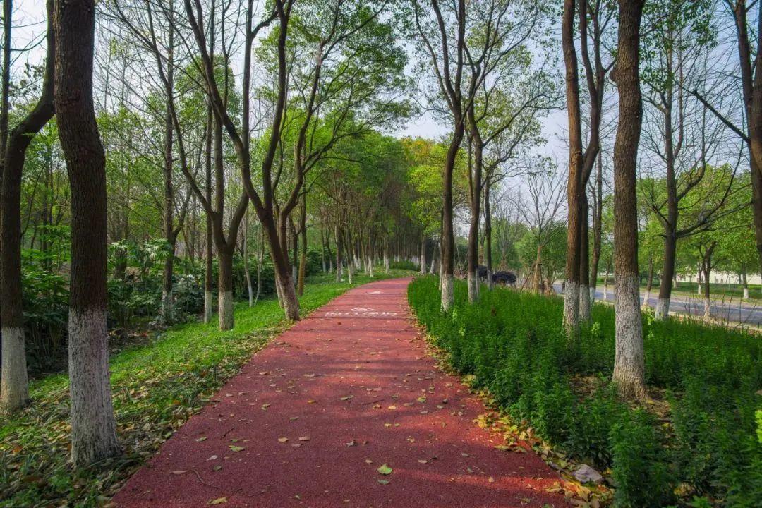 家门口的小森林!闵行最美绿道组团来袭