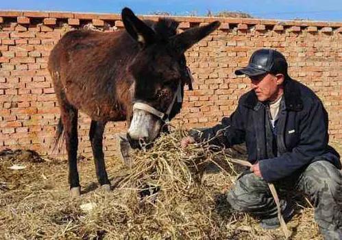 驴皮驴肉能卖几千块,养驴这么赚钱,为什么在农村很少看到有人养