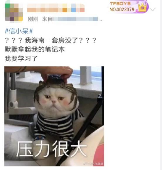 中国锦鲤女孩信小呆致歉事件激起一阵网浪,微博曝光超级主播KING被关闭