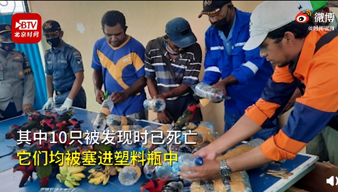 残忍!印尼74只珍稀鹦鹉被塞进塑料瓶走私,被发现时已有10只死亡