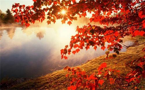 山明水净,深红出浅黄。江枫渔火,秋之静美。