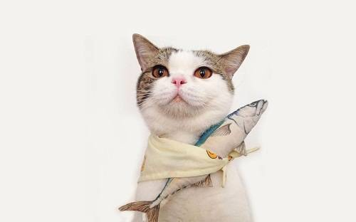 最适合猫咪的食物,并不是昂贵的进口猫粮!超全喂养指南就在这里