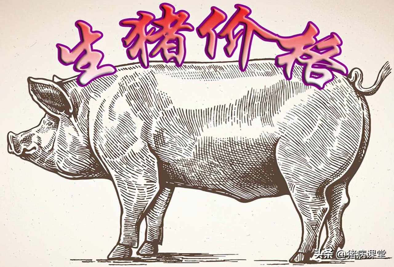 生猪价格|3月31日全国生猪今日价格呈现及未来猪价展望