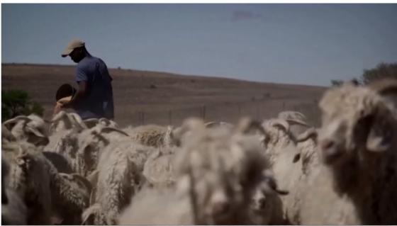 山羊和木瓜都被检测呈阳性,总统怒了,后续也来了