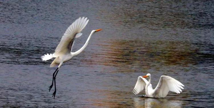 许昌这个湿地公园惊艳了时光,温柔了岁月!
