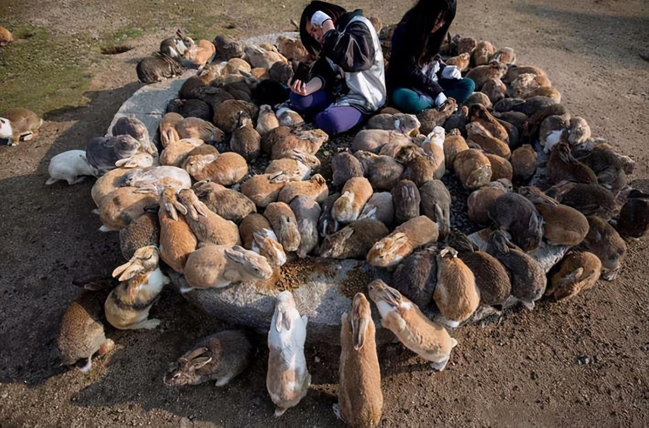 """缠斗150年的""""人兔大战"""",澳大利亚完败,100亿野兔泛滥为何不吃"""