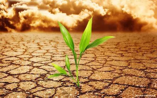 完整的土壤知识,值得收藏