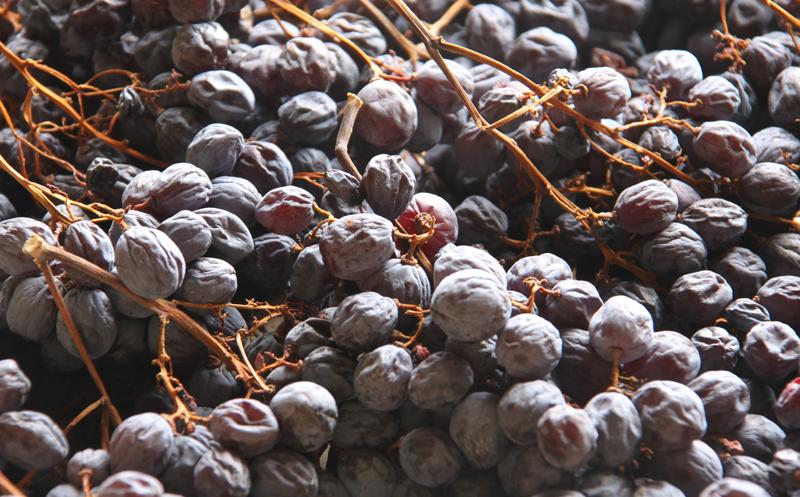 葡萄干也能酿酒吗?