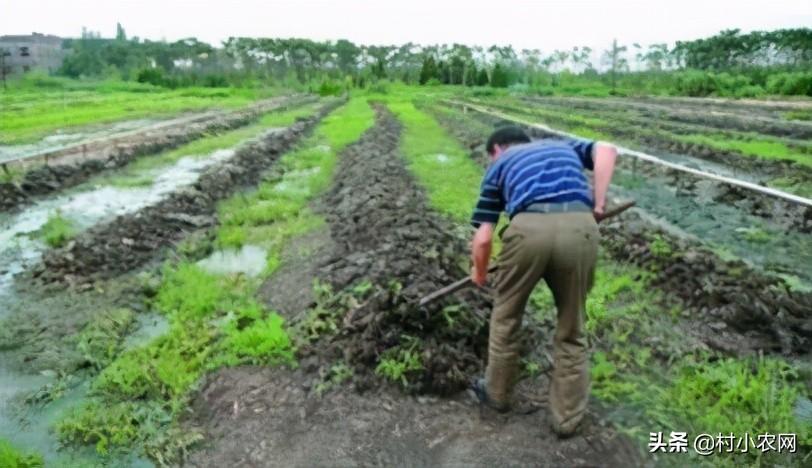 新农业创业项目有哪些(农村创业干啥最赚钱)插图(17)