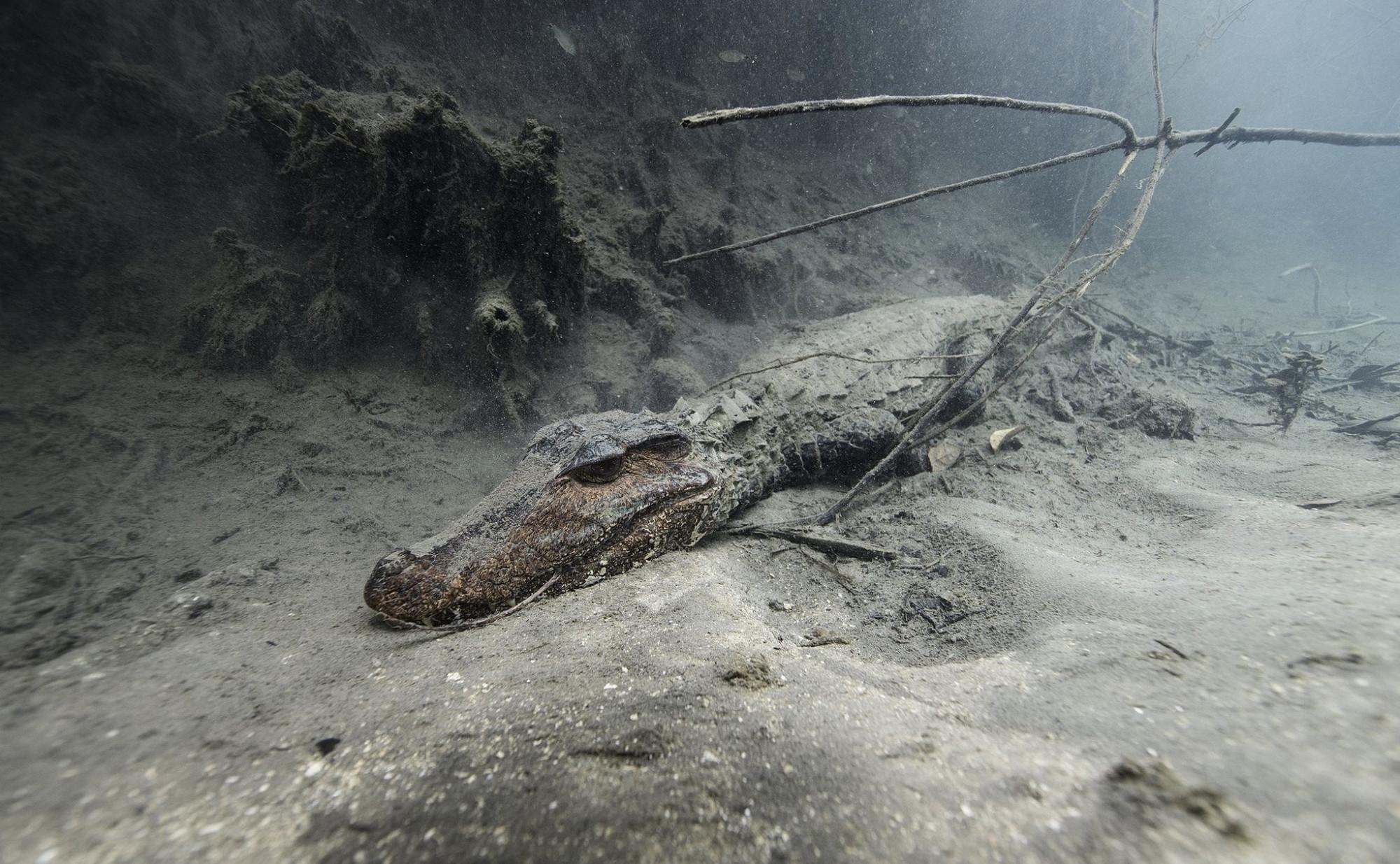 地球之肺亚马逊雨林,动物的天堂却成为人类禁区,到底有多恐怖?