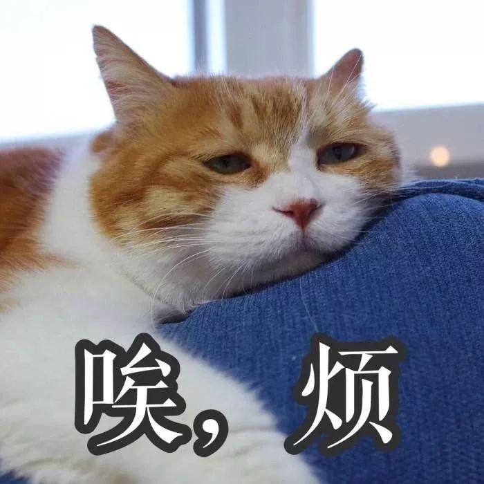 疫情期間,我家貓卻發情了,我該怎麽辦?