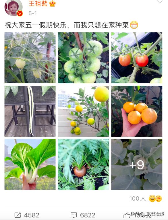 王祖藍曬自家菜園,吸引10萬網友點贊,網友:嚮往的生活太美好了