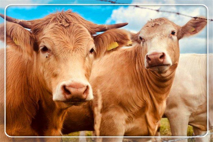 2021年在农村,养殖什么可以快速致富呢?推荐一下
