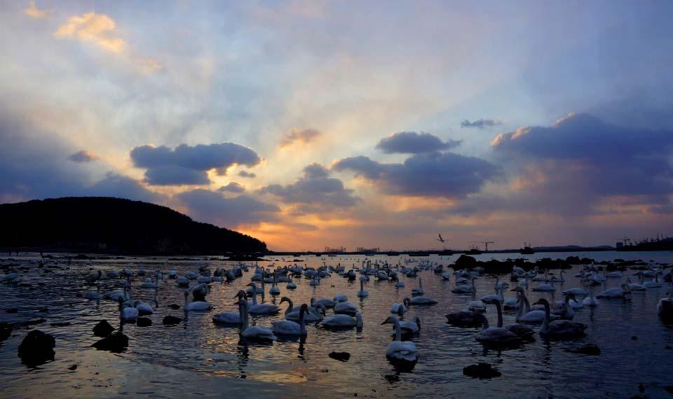 冬季来中国的好望角,看全国最早的海上日出,漫天飞舞的野生天鹅