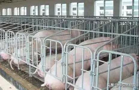 母猪饲养管理的10个要点