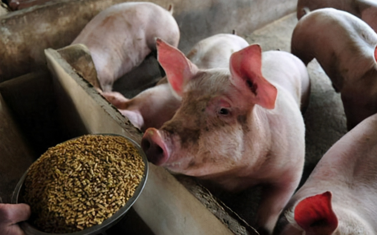 """猪价何时""""熄火""""?南方上演""""抢肉"""",春节前价格被""""固定""""?"""
