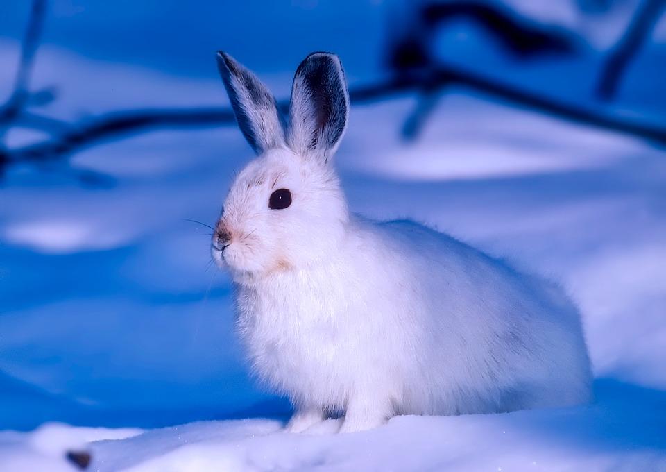世界上最耐寒的三种动物(组图)