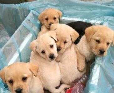 狗狗性别差异:公狗和母狗差别有多大?