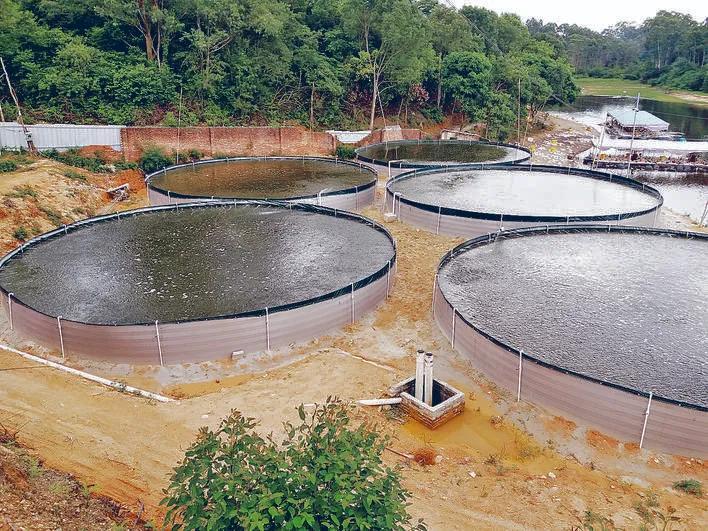 """说一下工厂化养鱼和循环水养殖:""""一哄而上,一搞就垮""""的浅见"""