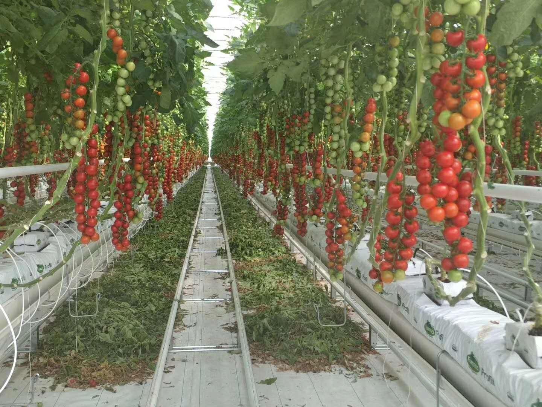 现代设施农业大棚如何为乡村振兴贡献、温室大棚有何功能