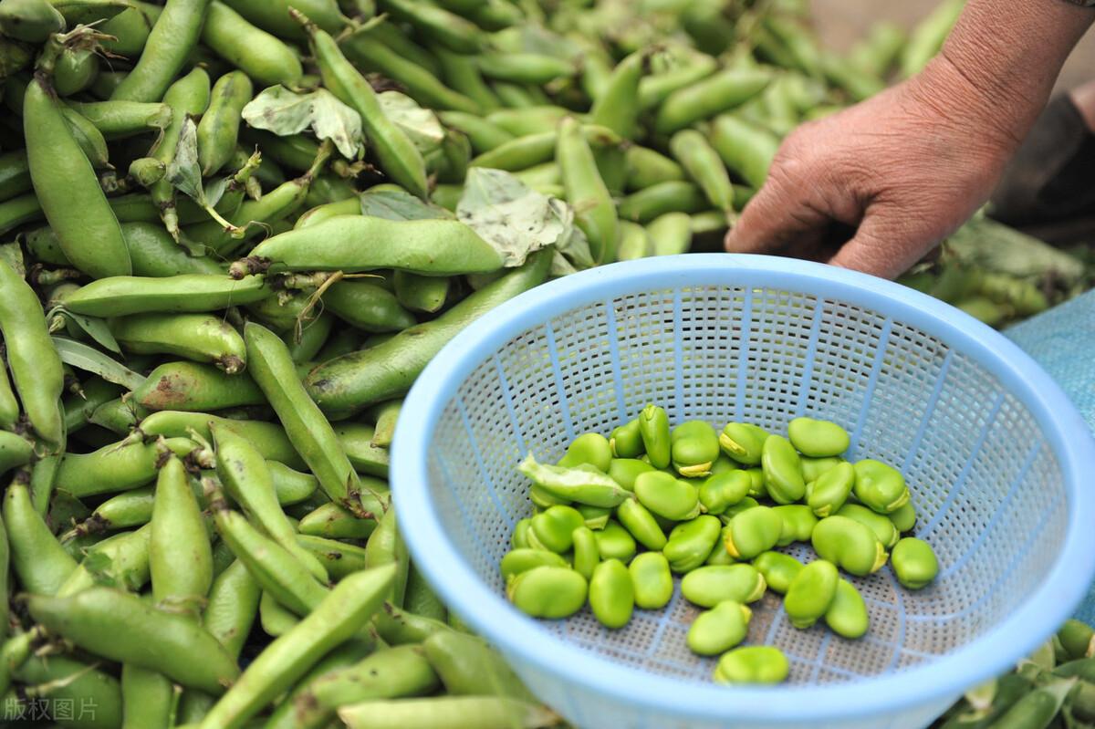 夏吃豆胜吃肉,立夏过后,这种豆子记得吃,好吃又解馋,营养丰富 美食做法 第4张