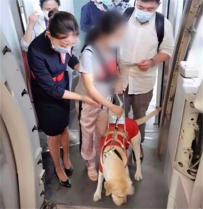 导盲犬坐公交曾被司机骂哭,可如今,它骄傲的带着主人登上了飞机