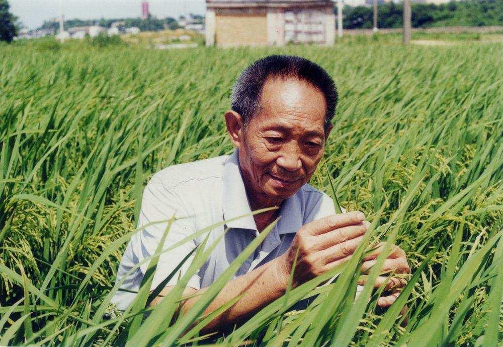袁隆平为什么不是中国科学院院士,却是美国科学院院士?