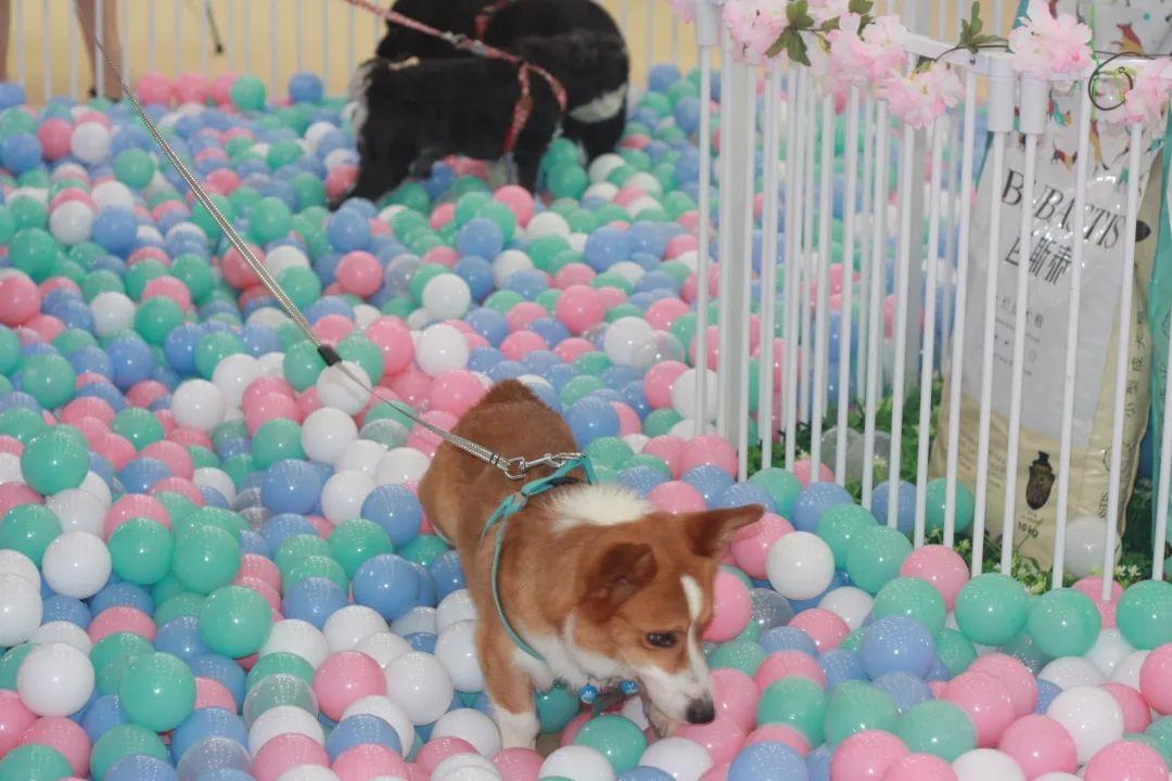 迎接华中地区高光时刻,9月18日CPF武汉宠物展带你走进宠力新时代